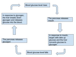 Homeostasis - Controlling blood sugar levels
